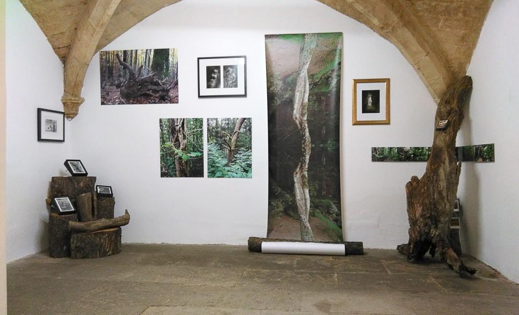 Exposition Le champ des possibles à la Galerie N°5, Montpellier